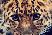 animales hermos