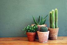 kamerplanten / groen in huis.... gezellig en goed voor je gezondheid!