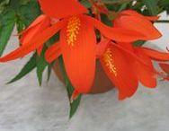 B -- Flowers