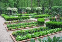 Vegetable and herb garden ideas