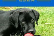 your dog ideas