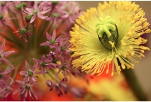 Flowers and Gardens / Decorations