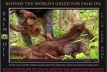 Palm Oil Check the Label & Say No! / by Tracey Bindner