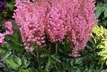 bitki delileri / doğada yetişen en güzel bitkiler