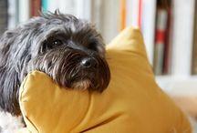 Patti Furry Dog Beds & Cushoins