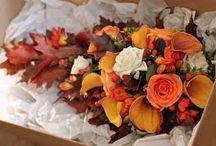 Emily's Fall Wedding Flowers / by Emily Buginsky