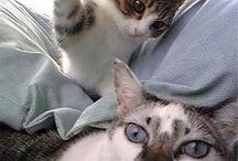 Pisici haioase