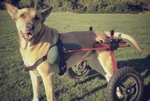 Special Needs Canines