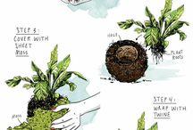 Gardening | Indoor plants
