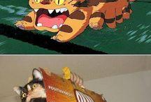 cats =^ω^=