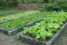 minhas hortas