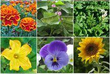 Jardinage / gardening