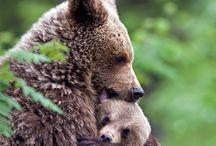 Bären Paradies