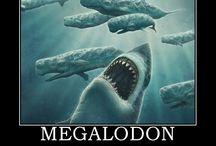 Megalodon (Prehistoric Shark)