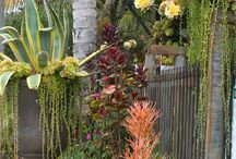 Hawaiian Landscape and Garden