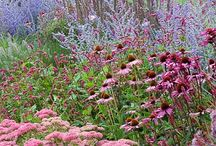 Plant Combos / Great plant combinations to combine flower color, size, and texture in interesting ways.