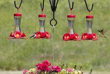 bebedero para colibris