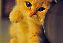 The cutest cats n dogs