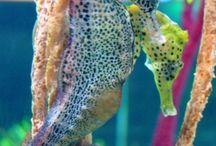 Aquatic Animals/Creatures / Beautiful aquatic animals