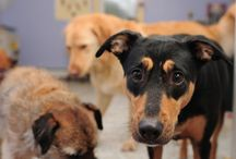 Dogs / by Stephanie Riley