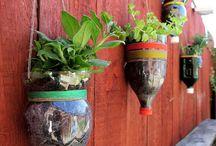Krukker, vegg og bakke / Planting i ulike ting