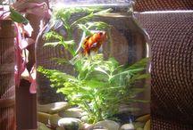 Mini akvárium