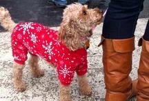 Cincinnati dog and pet events