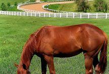 horse farm estate / by Corri Loan