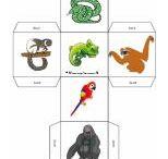 Rainforest Lesson ideas