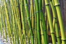 Bamboo-zled / by Scott Orman