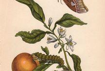 botanikci