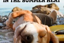Beat The Heat With Your Pet