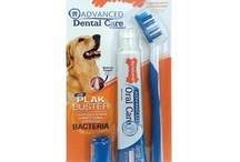Dog Dental Solutions / by Nylabone Products