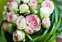 Bridal Bouquet / Bouquets