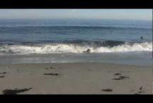 Ocean / by Tracee Peppersack