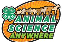 4-H: Veterinary Science / Do you have an animal you want to keep healthy or are you interested in a career in keeping animals healthy? The 4‐H veterinary science project helps you explore and learn more about animal health in your home, club, community, country and world. Increase your knowledge about how animal health affects public health!