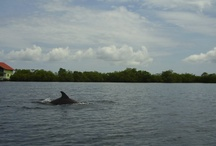 Bocas del Toro / Bocas del Toro - Panama, Střední Amerika