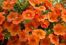 Flores 1 / by Conxi Sedna
