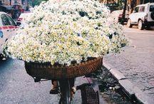flora.