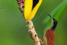 Oiseaux birds and colors !!!