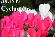 TAT Garden / For all your gardening needs! TAT Garden has everything for the green thumbed Australian