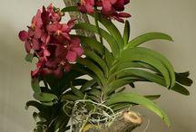 orquídario virtual