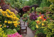Gardens & Outdoors
