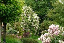 garden I gärten
