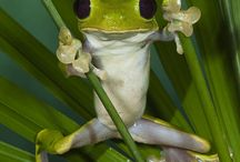 Frogtastic / It's a frog thing, happy memories. Love and miss you always dad xxx