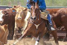 Horses-Rodeo