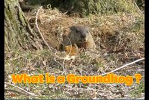 Classroom: Groundhogs