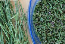 Ceuillette plantes sauvages