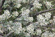 YlleKKellY Plants to consider 2012 / by Kelly Rita Birtch