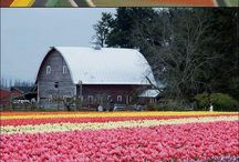 Holland ❤️